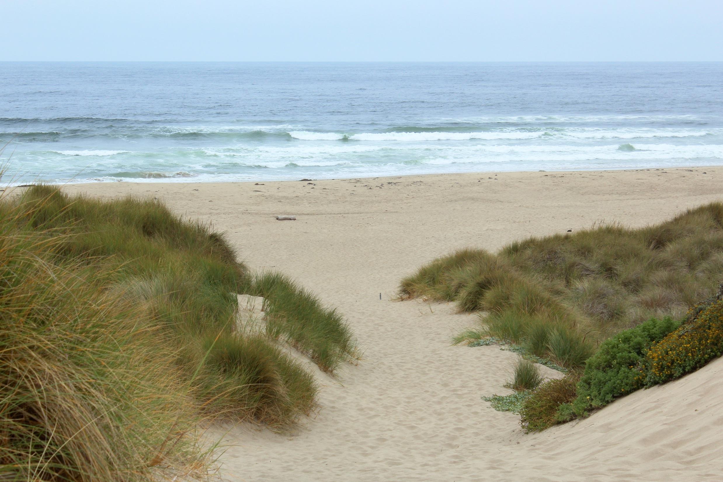 Stinson Beach Dog Friendly
