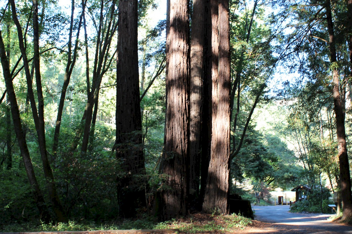 Samuel P  Taylor State Park - Camping | Marin Convention