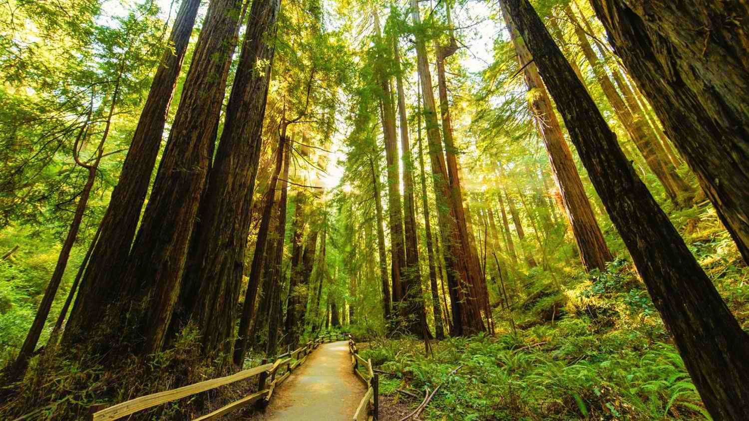 FREE National Park Day At Muir Woods January 2020