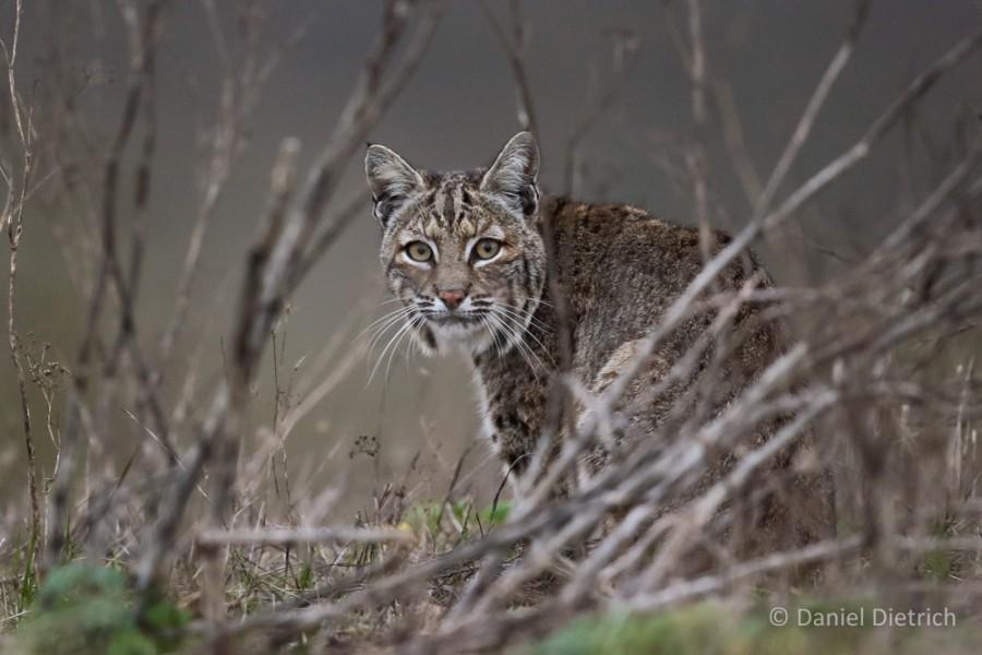 point reyes safaris wildlife marin county 2018 marin