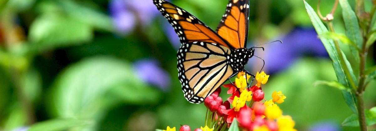 Point Reyes National Seashore Association Field Class   Create A Monarch  Butterfly Garden
