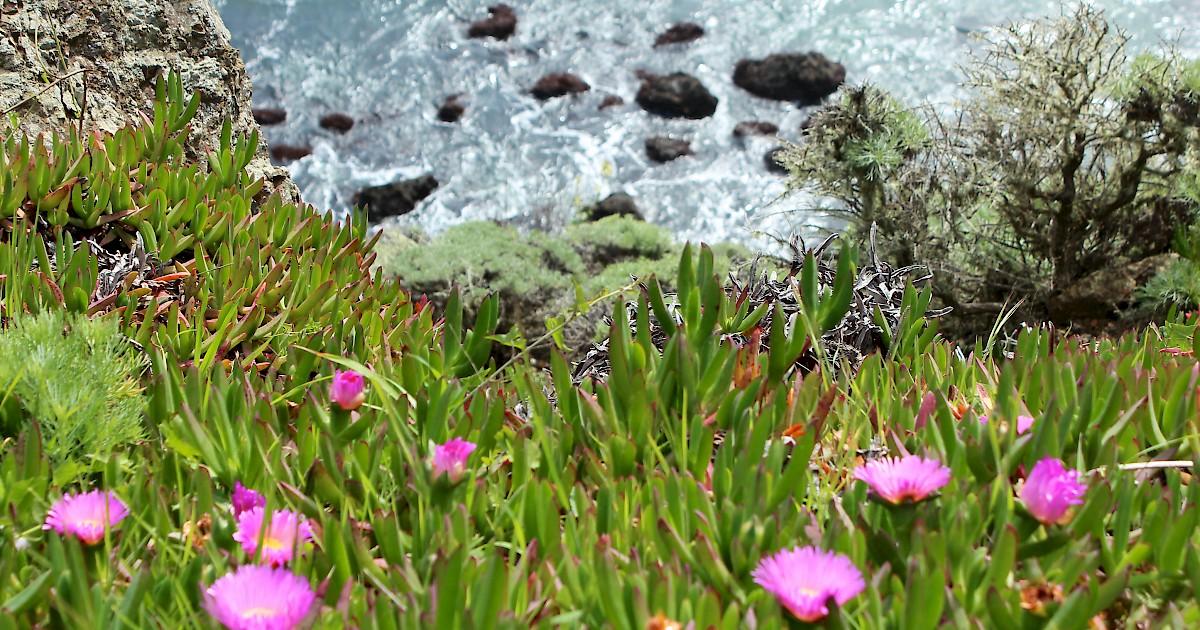 The Best Spring Wildflower Walks In Marin County Marin